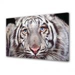 Tablou Canvas Luminos in intuneric VarioView LED Animale Tigru alb cu ochi albastri