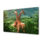 Tablou Canvas Animale Girafe in Africa