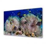Tablou Canvas Animale Recif de corali