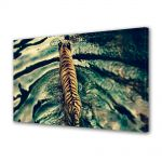 Tablou Canvas Animale Dungi de tigru