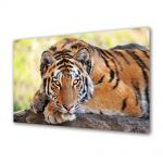 Tablou Canvas Luminos in intuneric VarioView LED Animale Tigru tanar