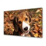 Tablou Canvas Luminos in intuneric VarioView LED Animale Catel Beagle