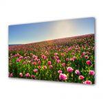 Tablou Canvas Luminos in intuneric VarioView LED Flori Superb camp colorat cu flori