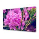 Tablou Canvas Flori Rododendron violet