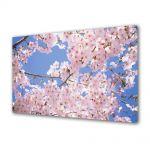 Tablou Canvas Flori Ciresi japonezi infloriti