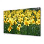 Tablou VarioView MoonLight Fosforescent Luminos in intuneric Flori Narcise galbuie