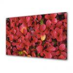 Tablou Canvas Flori Petale rosii