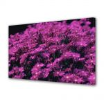 Tablou Canvas Luminos in intuneric VarioView LED Flori Violet aprins