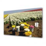 Tablou Canvas Luminos in intuneric VarioView LED Flori Randuri de flori
