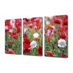 Set Tablouri Multicanvas 3 Piese Flori Camp de maci