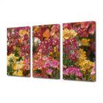 Set Tablouri Multicanvas 3 Piese Flori Aglomeratie de flori