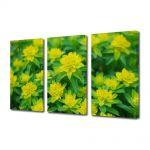 Set Tablouri Multicanvas 3 Piese Flori Floricele curioase