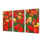 Set Tablouri Multicanvas 3 Piese Flori Miros de lalele
