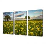 Set Tablouri Multicanvas 3 Piese Flori Camp plin de flori