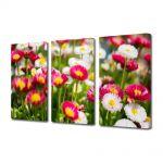 Set Tablouri Multicanvas 3 Piese Flori Margarete colorate
