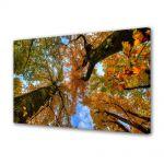 Tablou VarioView MoonLight Fosforescent Luminos in intuneric Peisaje Doi copaci de jos