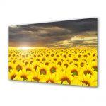 Tablou Canvas Peisaj Lan de floarea soarelui