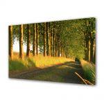 Tablou VarioView MoonLight Fosforescent Luminos in intuneric Peisaje Copaci pe marginea drumului