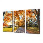 Set Tablouri Multicanvas 3 Piese Peisaj Umbre de copaci