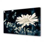 Tablou Canvas Vintage Aspect Retro Floare alba