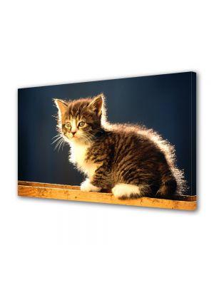 Tablou Canvas Animale Pisica simpatica