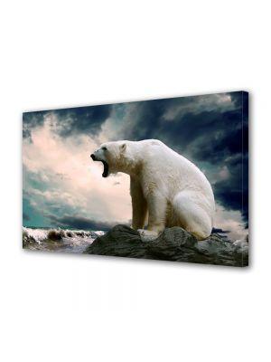 Tablou Canvas Animale Urs Polar