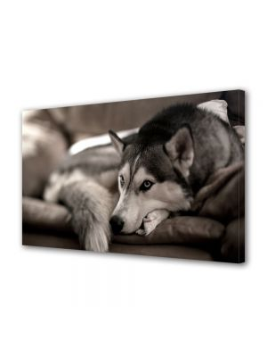 Tablou Canvas Luminos in intuneric VarioView LED Animale Caine Husky Siberian