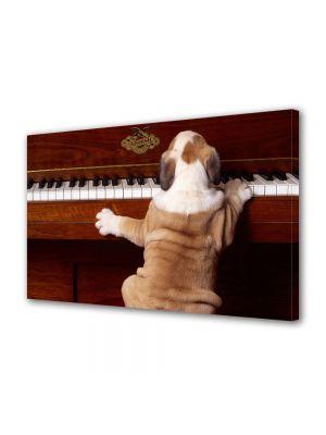 Tablou Canvas Animale Caine canta la pian