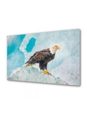Tablou Canvas Luminos in intuneric VarioView LED Animale Vultur
