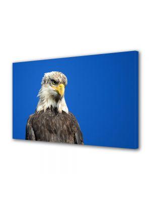 Tablou Canvas Animale Privirea unui vultur