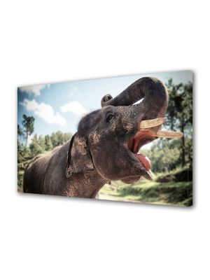 Tablou Canvas Animale Elefant in Tailanda