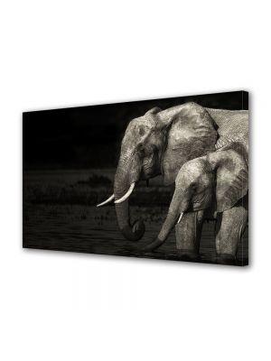 Tablou Canvas Luminos in intuneric VarioView LED Animale Elefanti Alb Negru