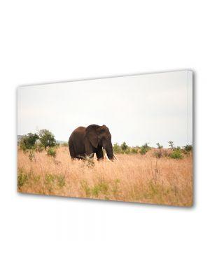 Tablou Canvas Luminos in intuneric VarioView LED Animale Elefant in mediul natural
