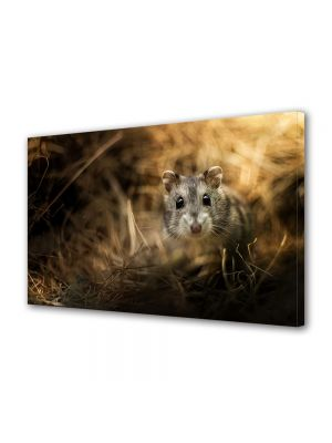 Tablou Canvas Animale Soricel