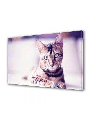 Tablou Canvas Animale Pisica se uita la tine