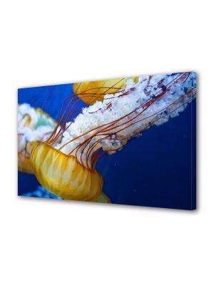 Tablou Canvas Animale Meduza in marea japoneza