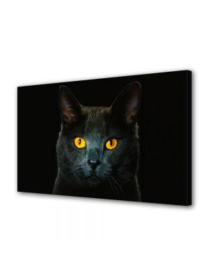 Tablou Canvas Animale Pisica neagra cu ochi galbeni