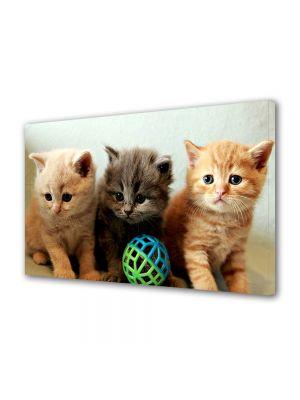 Tablou Canvas Animale Trei pisici