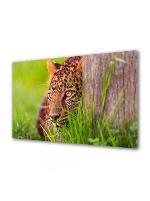 Tablou Canvas Animale Privire de leopard