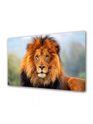 Tablou Canvas Animale Leul regele junglei