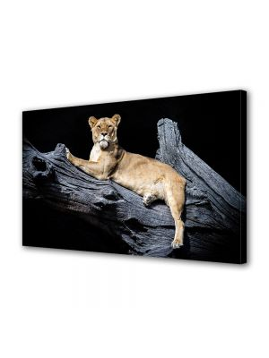 Tablou Canvas Animale Lei