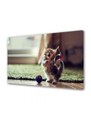 Tablou Canvas Animale Pisicuta jucausa