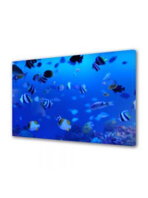 Tablou Canvas Animale Viata marina