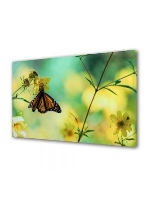 Tablou Canvas Animale Fluture hranindu-se