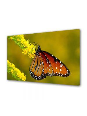 Tablou Canvas Animale Fluture pe cranguta galbena