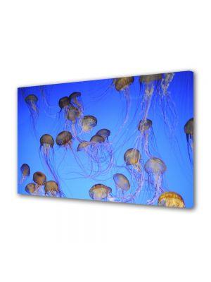 Tablou Canvas Animale Multe meduze