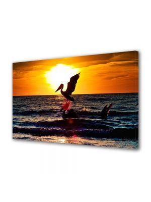Tablou Canvas Animale Pelicani pe mare