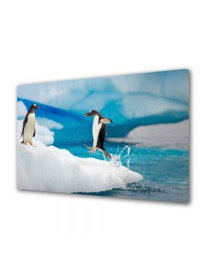 Tablou Canvas Animale Pinguin sarind