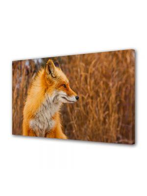 Tablou Canvas Animale Vulpe rosie