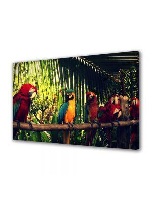 Tablou Canvas Animale Papagali Roiali